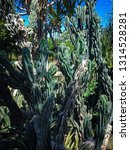 natural types of cactus plants... | Shutterstock . vector #1314528281