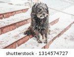 black yard dog  with shaggy... | Shutterstock . vector #1314574727