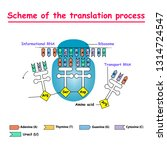 scheme of the translation... | Shutterstock .eps vector #1314724547