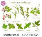 herbs collection  2 | Shutterstock .eps vector #1314741464