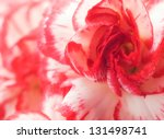 macro of cloves flower.... | Shutterstock . vector #131498741