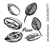 pecan nuts and leaves hand... | Shutterstock . vector #1315058777