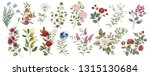 botanical collection of... | Shutterstock . vector #1315130684