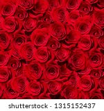 Close Up Roses White Background - Fine Art prints