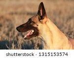 portrait of a beautiful dog...   Shutterstock . vector #1315153574