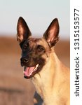portrait of a beautiful dog...   Shutterstock . vector #1315153577