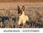 portrait of a beautiful dog...   Shutterstock . vector #1315153601