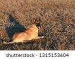 portrait of a beautiful dog...   Shutterstock . vector #1315153604