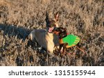big and small dogs breed...   Shutterstock . vector #1315155944