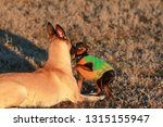 big and small dogs breed...   Shutterstock . vector #1315155947