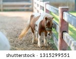 small cute horse equine steed... | Shutterstock . vector #1315299551
