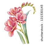 watercolor with freesia flower | Shutterstock . vector #131530145