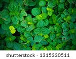 top view the tiny deep and... | Shutterstock . vector #1315330511