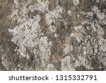 gritstone boulder with grey... | Shutterstock . vector #1315332791