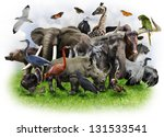 a collage of wild animals and... | Shutterstock . vector #131533541