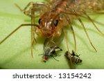 centipede   Shutterstock . vector #13154242