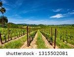vineyards landscape in... | Shutterstock . vector #1315502081