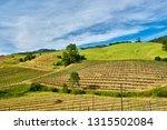 vineyards landscape in... | Shutterstock . vector #1315502084
