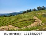 vineyards landscape in... | Shutterstock . vector #1315502087