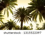 beautiful palm grove in the... | Shutterstock . vector #1315522397