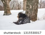 shaggy big dog lying on the... | Shutterstock . vector #1315530017
