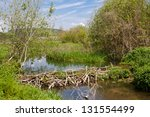 beaver dam at a small creek | Shutterstock . vector #131554499