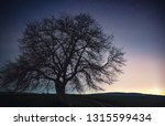 solitary tree close up at... | Shutterstock . vector #1315599434