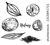 nutmeg and leaves hand drawn... | Shutterstock . vector #1315891721