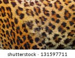 Textured Detail Of Leopard Fur...