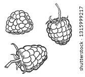 vector set of sketch raspberry | Shutterstock .eps vector #1315999217