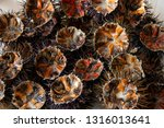 close up of fresh sea urchins | Shutterstock . vector #1316013641