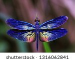 Stock photo beautiful dragonfly dragonflies of thailand 1316062841