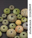 sea urchin background - stock photo