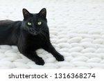 Black Cat Relaxing On White...