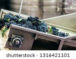 modern winery machine with... | Shutterstock . vector #1316421101