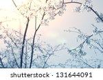cherry blossoms in full bloom... | Shutterstock . vector #131644091