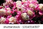 sunny flowers on the flower bed | Shutterstock . vector #1316516507