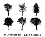 the silhouette tree on white... | Shutterstock .eps vector #1316528891