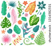 collection of tropical... | Shutterstock .eps vector #1316582531