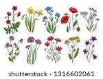 Wild Flowers. Meadow Plants...