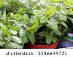 close up of fresh green... | Shutterstock . vector #1316644721