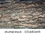 Texture Of Pine Bark. Background