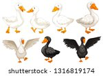 set of duck character... | Shutterstock .eps vector #1316819174