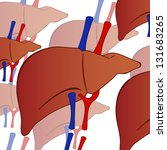 human liver background | Shutterstock .eps vector #131683265