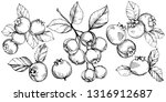 vector blueberry black and... | Shutterstock .eps vector #1316912687