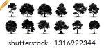 tree silhouettes on white... | Shutterstock .eps vector #1316922344