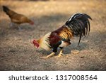 closeup chicken with blurred... | Shutterstock . vector #1317008564