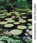 Singapore Botanic Gardens   Jan ...
