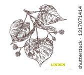 sketch vector linden sprig. ... | Shutterstock .eps vector #1317071414