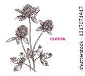 sketch vector clover flower... | Shutterstock .eps vector #1317071417